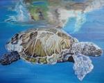 turtle - Copy